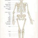 Skeleton - White by FinlayMcNevin