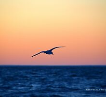Seagull | Mattituck, New York by © Sophie W. Smith
