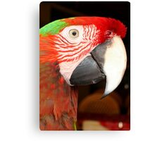 A Beautiful Bird Harlequin Macaw Portrait Canvas Print