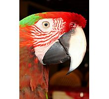 A Beautiful Bird Harlequin Macaw Portrait Photographic Print
