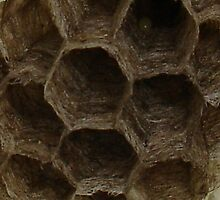 Abandoned Wasp Nest by taiche