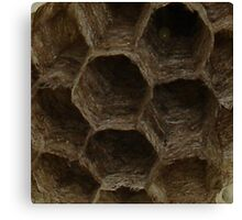 Abandoned Wasp Nest Canvas Print
