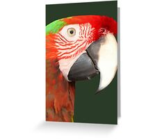 A Beautiful Bird Harlequin Macaw Portrait Background Removed Greeting Card