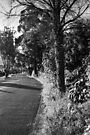 A Road in Hobart by BRogers