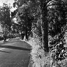 A Road in Hobart by Brett Rogers