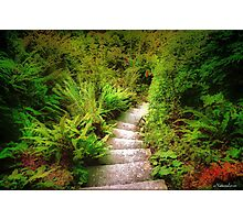 Garden Steps Photographic Print