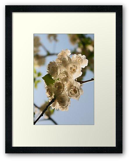 Blossoms I by Jeanne Horak-Druiff