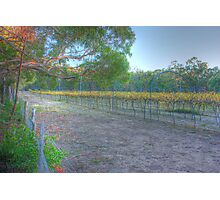 Local winery Photographic Print