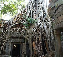 Strangler Fig Tree at Temple Ta Prohm, Cambodia by Bev Pascoe