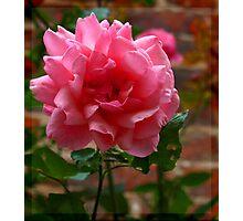 Gleaming Rose Photographic Print