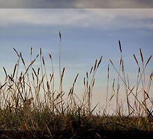 Grass #1 by Britta Döll