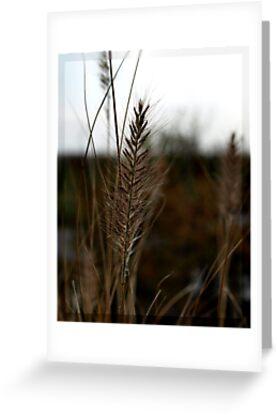 Grass #2 by Britta Döll
