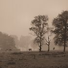foggy landscape by Heike Nagel