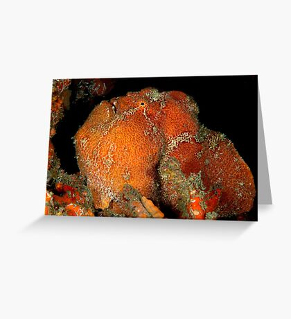Giant Frogfish Greeting Card