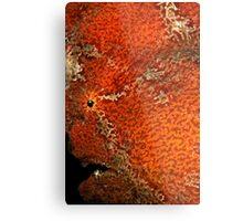 Giant Frogfish Portrait Metal Print
