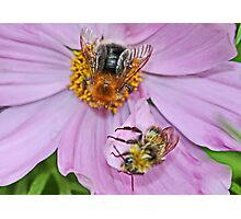 Two Bee or not Two Bee Photographic Print