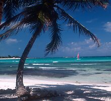 Scenic Caribbean Beach by InterfaceImages