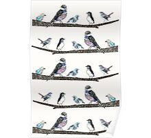 Birds On A Branch.  Poster