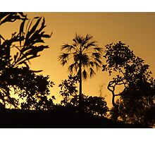 One Palm Hill Photographic Print