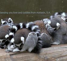 Love and cuddles from Adelaide, S.A. by elphonline