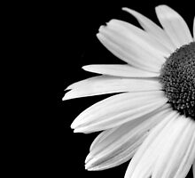 Half daisy in black and white by by-jwp