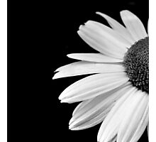 Half daisy in black and white Photographic Print