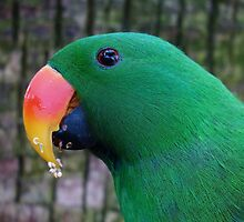Parrot by franceslewis