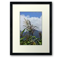 Corn in a Field Framed Print