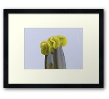Sculptures created by nature Framed Print