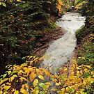cuyahoga valley national park's bridal veil falls on a fall day by 1busymom