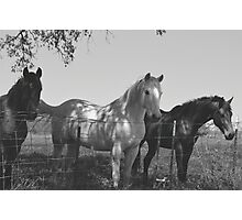 Horses black and white  Photographic Print