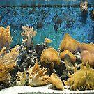 Under water life by Arie Koene