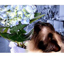 I Love Flowers!   Photographic Print