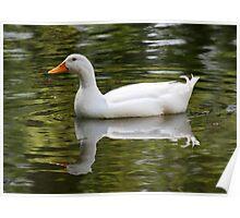 reflexion of a goose Poster
