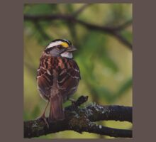 White-throated sparrows[edit] Kids Clothes