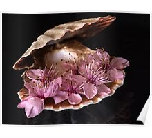 Oyster Shell Poster