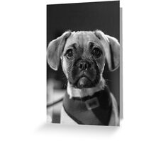 puppy eyes Greeting Card