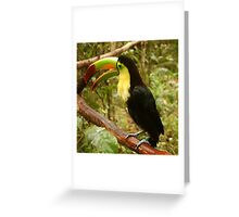The keel-billed toucan Greeting Card