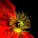 Positive Negative Poppy by Jerri Johnson