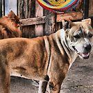 Top Dog by Carla Jensen