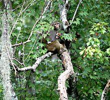 No Monkey Business by Cheri Bouvier-Johnson