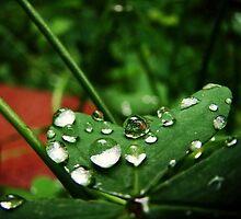 lucky four-leaf clover by biancabvg
