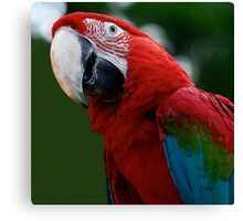 Close-Up Of A Green-Winged Macaw Canvas Print