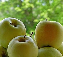 Golden Delicious by Susan S. Kline