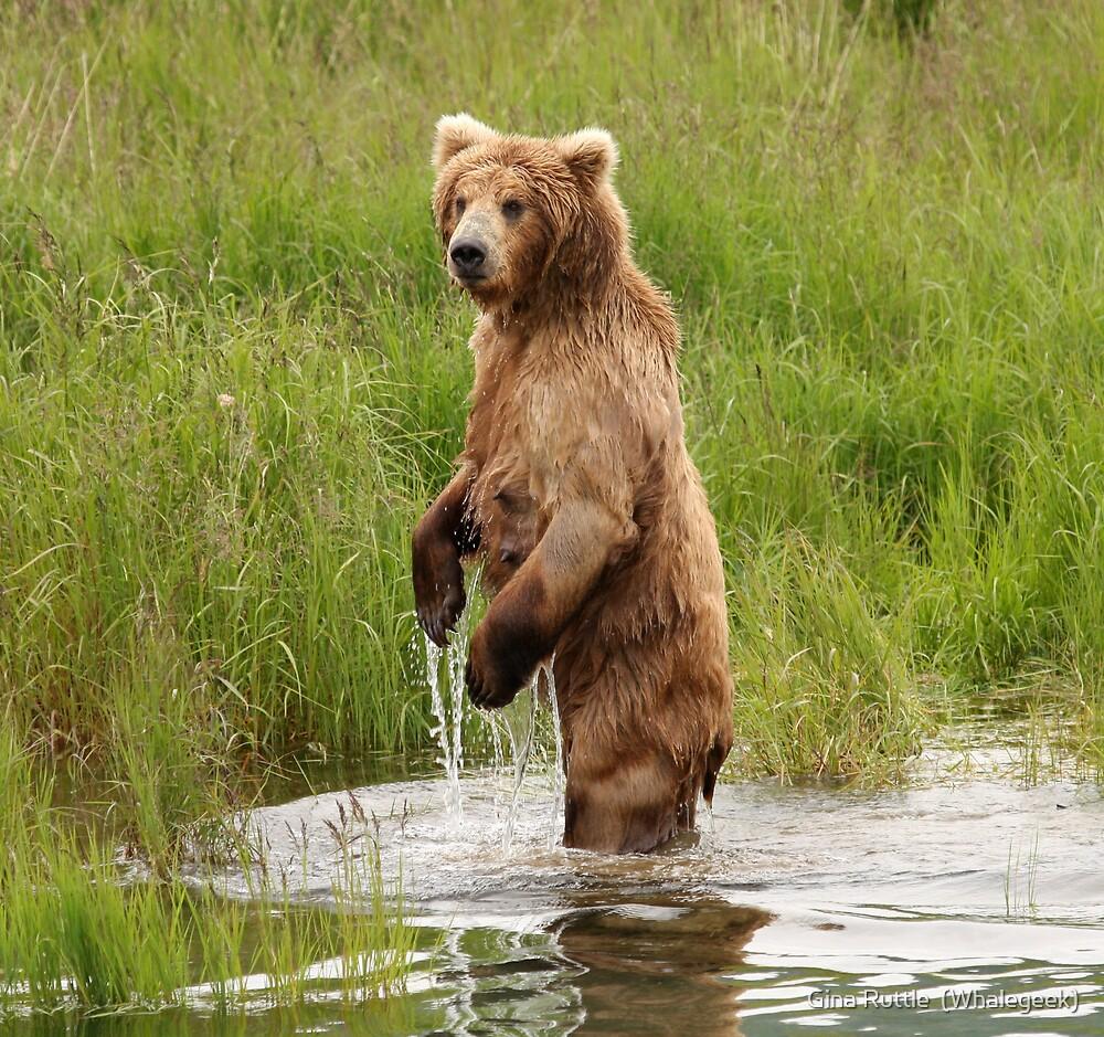 Mama Bear by Gina Ruttle  (Whalegeek)