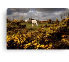 Springtime on Bodmin Moor Canvas Print