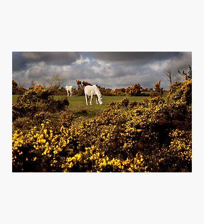 Springtime on Bodmin Moor Photographic Print