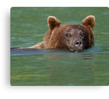 Grizzly Bear Swimming Canvas Print