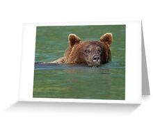 Grizzly Bear Swimming Greeting Card