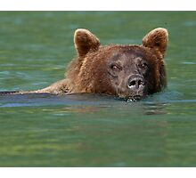 Grizzly Bear Swimming Photographic Print